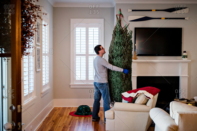 Dad Placing A Christmas Tree In The Living Room Stock Photo