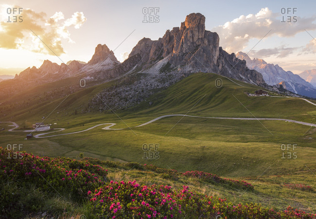 Flowering of rhododendrons at Giau Pass with the Ra Gusela on background at sunset, Dolomites, Cortina D'ampezzo,  Italy