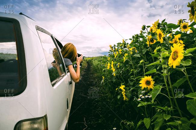 Sunflower Field Stock Photos Offset