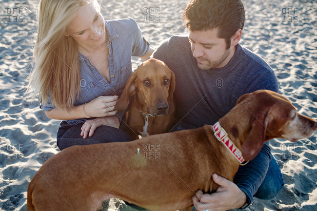 High angle view of couple with dogs at beach during sunny day