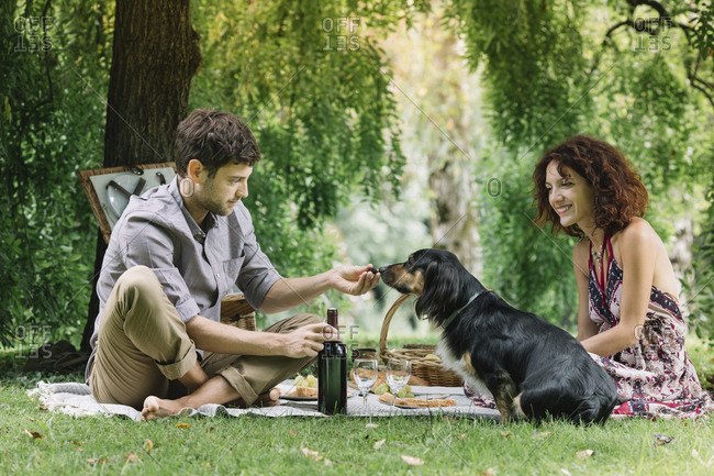 Couple with dog having a picnic in a park