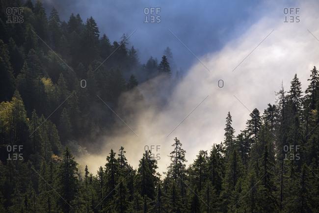Foggy autumn landscape in the Carpathians