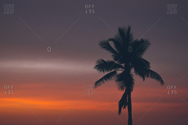 Palm tree against colorful sunset sky in Muscat, Oman