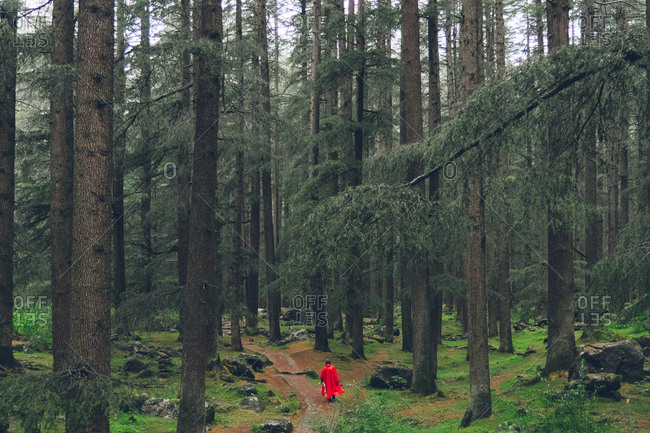 Person walking in rainy woods with a red poncho, Manali, Himachal Pradesh, India