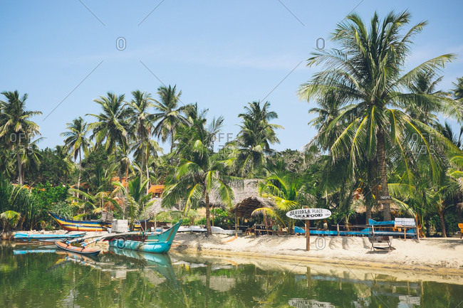 Arugam Bay, Sri Lanka - July 27, 2017: Boats moored under tropical palm trees in the Arugam Bay, Sri Lanka