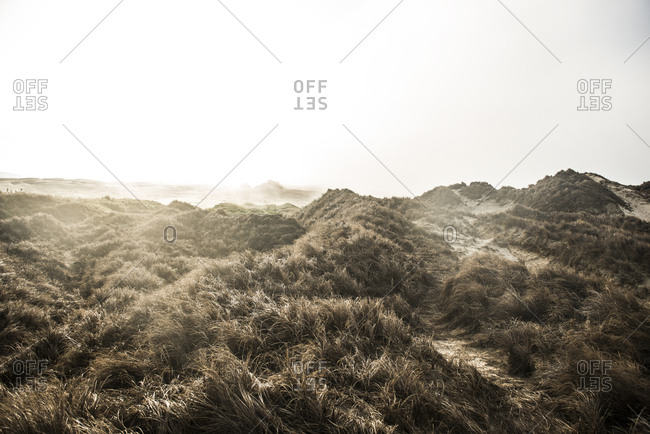 Scenic view of grass growing against clear sky