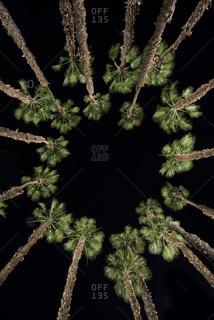 Directly below shot of palm trees against clear sky during night