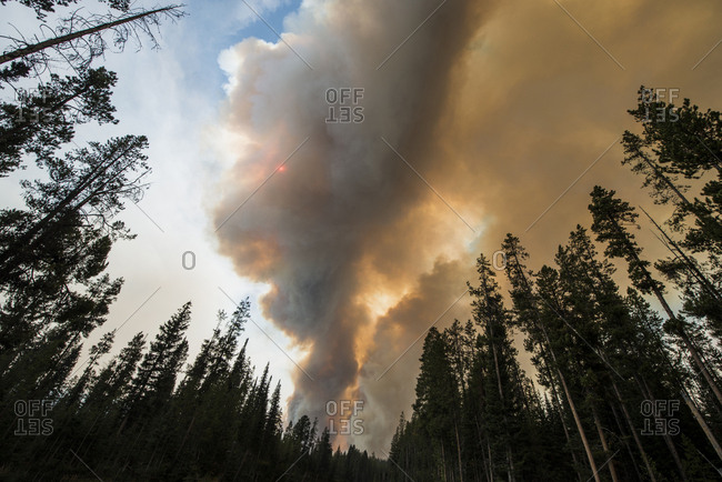 Low angle view of smoke emitting during forest fire at Grand Teton National Park