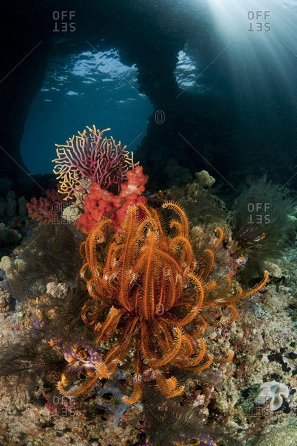 Swim-through at dive site called Boo with corals and feather star. Misool, Raja Ampat, West Papua, Indonesia