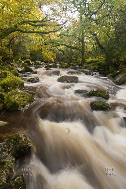 River Plym flowing through Dewerstone Wood, Shaugh Prior, Dartmoor National Park, Devon, England, UK, October 2011
