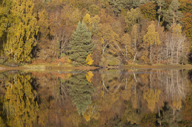 Trees reflecting in Loch Vaa, Cairngorms National Park, Scotland, UK, October 2012