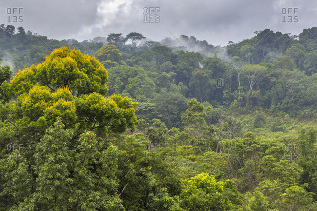 Lowland rainforest, Osa Peninsula, Costa Rica
