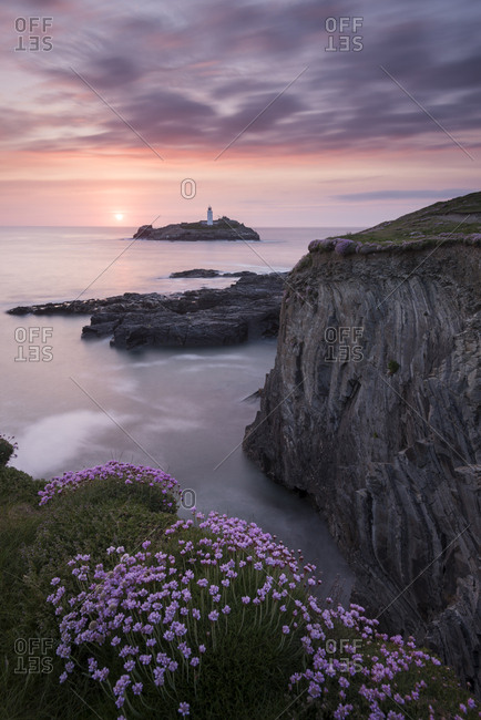 Godrevy Lighthouse and flowering pink thrift (Armeria maritima), nr Hayle, Cornwall, UK. May