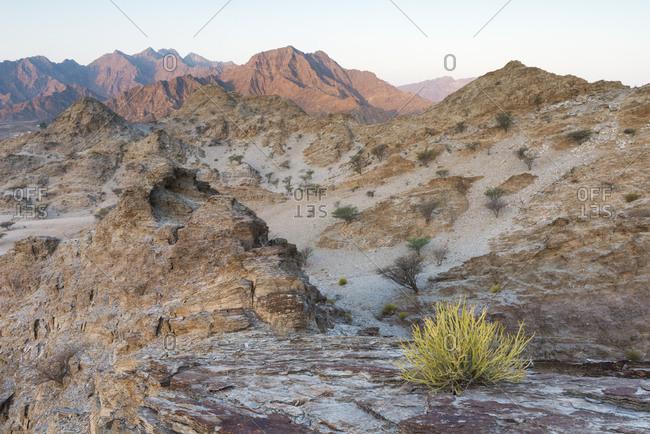 Sedimentary rocks in the Hajar Mountains. United Arab Emirates