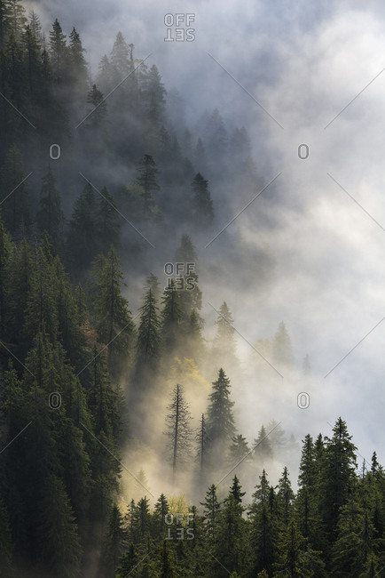 Foggy autumn landscape in the Piatra Mare Mountains, Transylvania, Romania