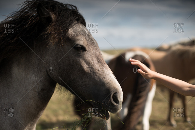 Girl feeding grass to horse