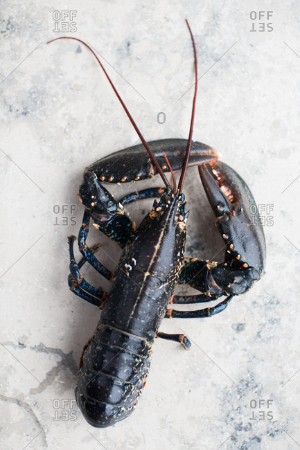 Close-up of black lobster