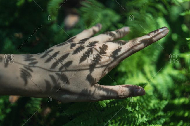 Close-up of crop hand with shadow pattern from plant.