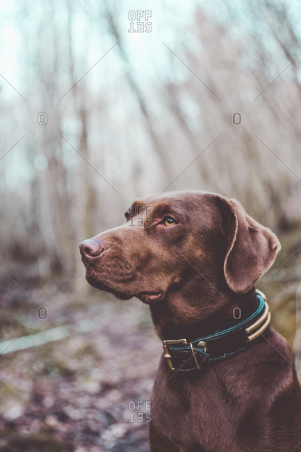 Charming dog in nature
