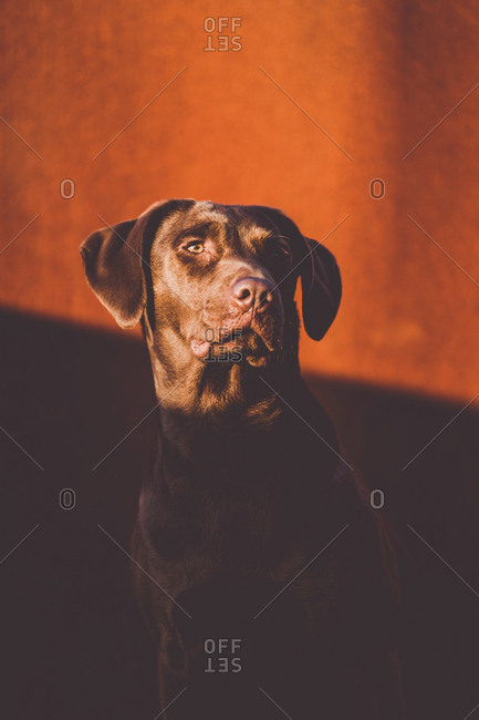 Dog looking away