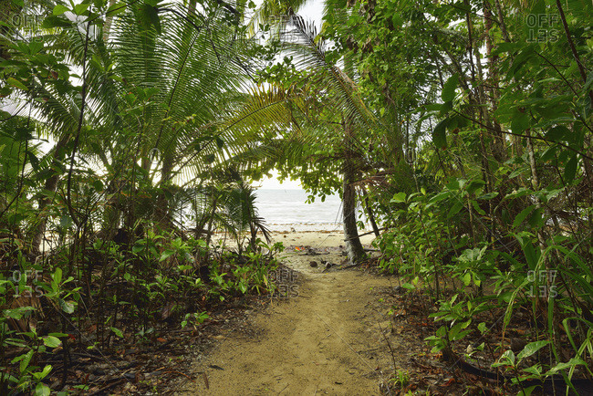 Path to Beach, Daintree Rainforest, Cape Tribulation, Queensland, Australia