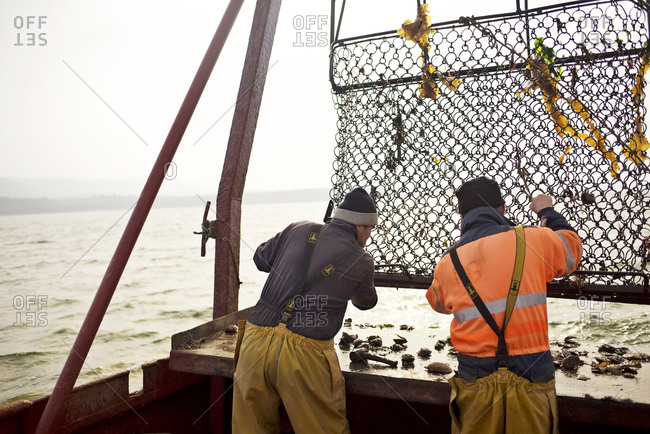 Oyster fishermen removing catch from their cage