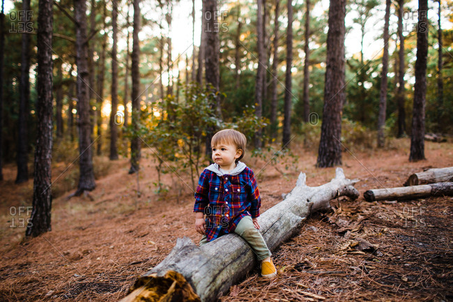 Toddler boy sitting on fallen tree in a forest in autumn
