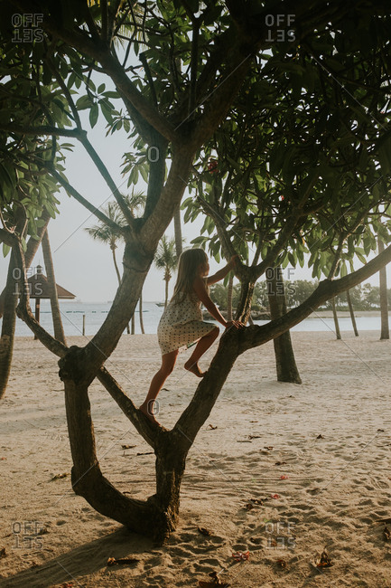 Young girl climbing a tree on a beach at sunset