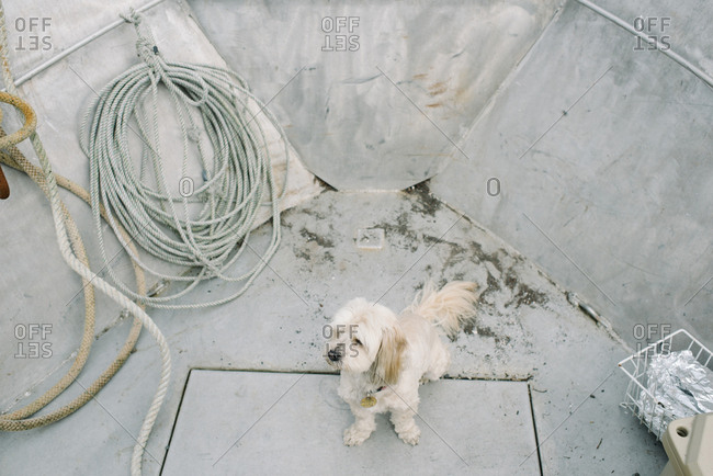 Furry white dog riding in a fishing boat