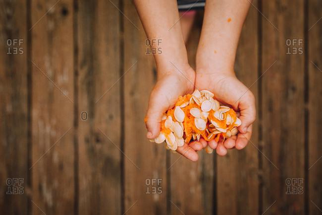 Hands holding pumpkin guts