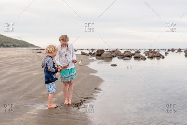 Brother and sister sharing sea shells at the beach