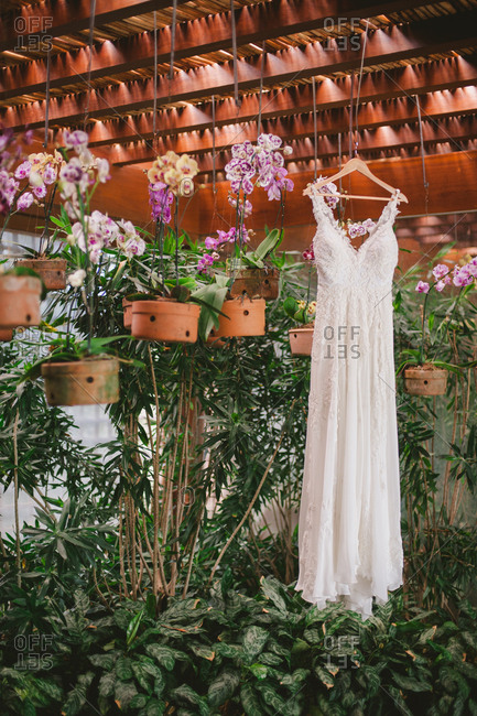Wedding dress hanging among potted plants