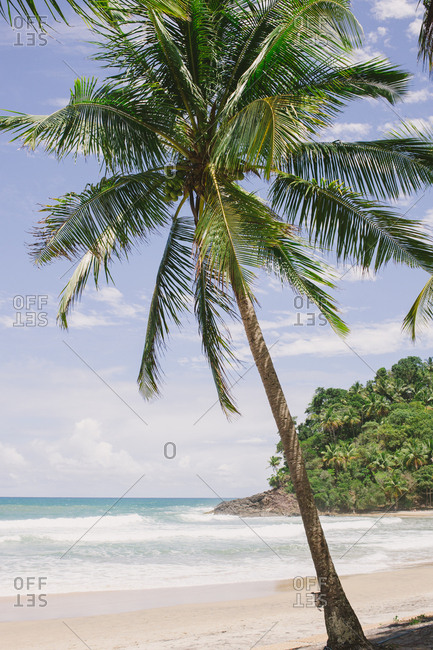 Palm tree at tropical sandy beach