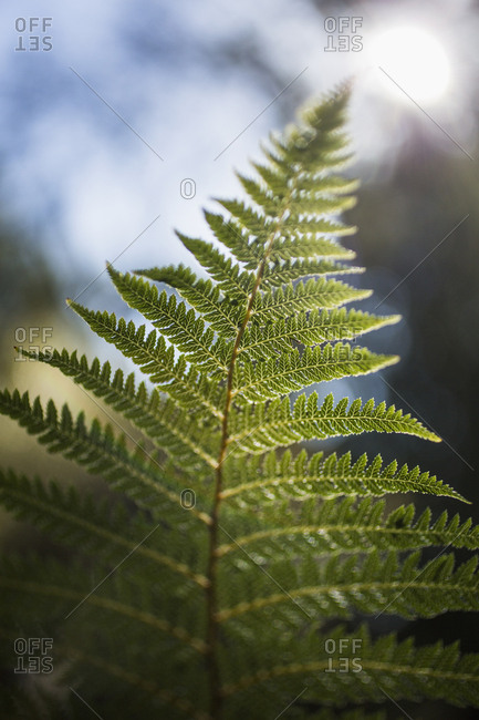 Close-up of green fern branch