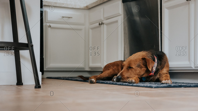 Dog sleeping on kitchen rug