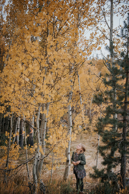Girl looking up at a tree in the forest in autumn