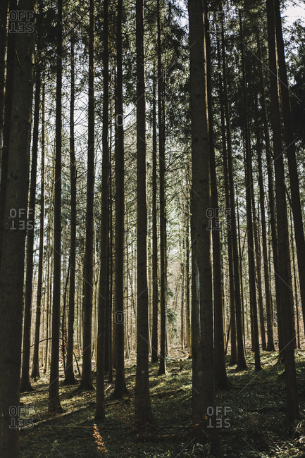 Tranquil view of trees growing in forest