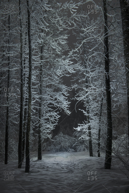 Scenic view of bare trees growing on snowy field in forest during night