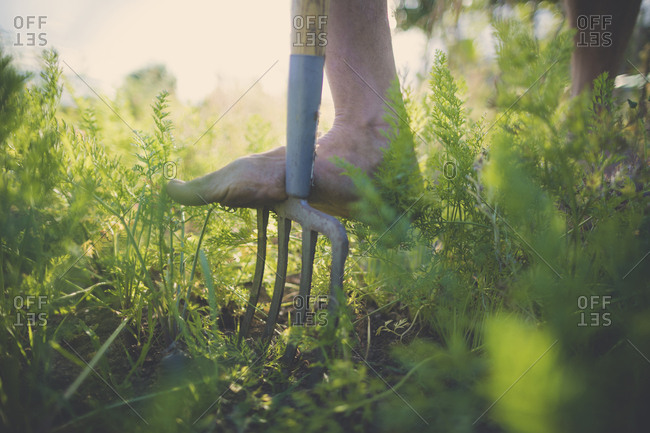 Low section of man using gardening fork at community garden