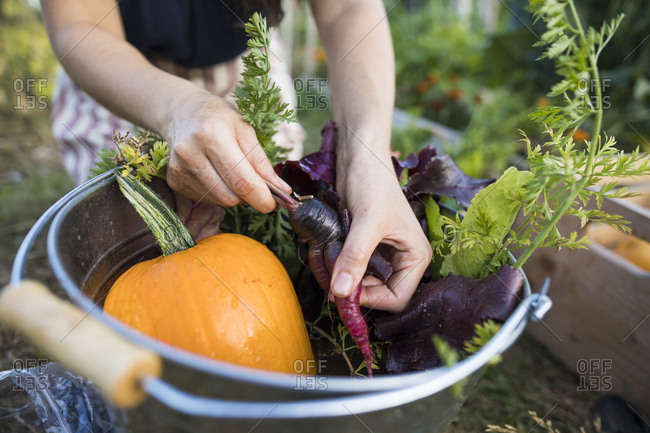 Midsection of woman washing vegetables in bucket at community garden