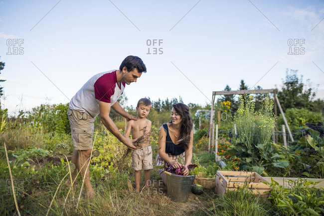 Shirtless son holding cereal plants while standing between mother and father at community garden