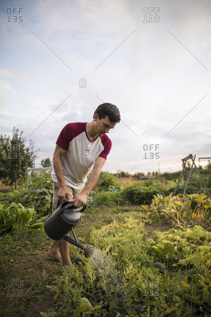 Man watering plants at community garden against sky