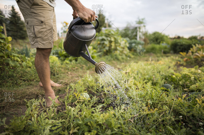 Low section of man watering plants at community garden