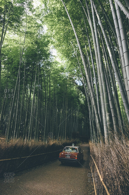 Car on road amidst bamboo plants