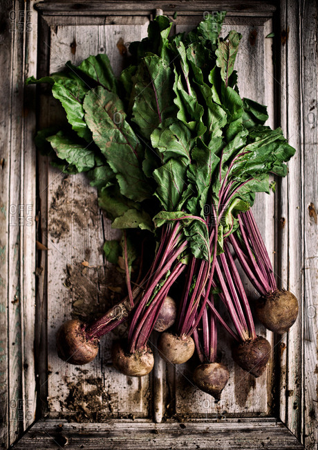 Freshly picked beets with dirt on a wooden surface