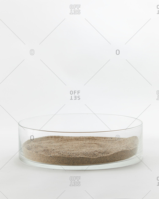Dish with sand for a terrarium