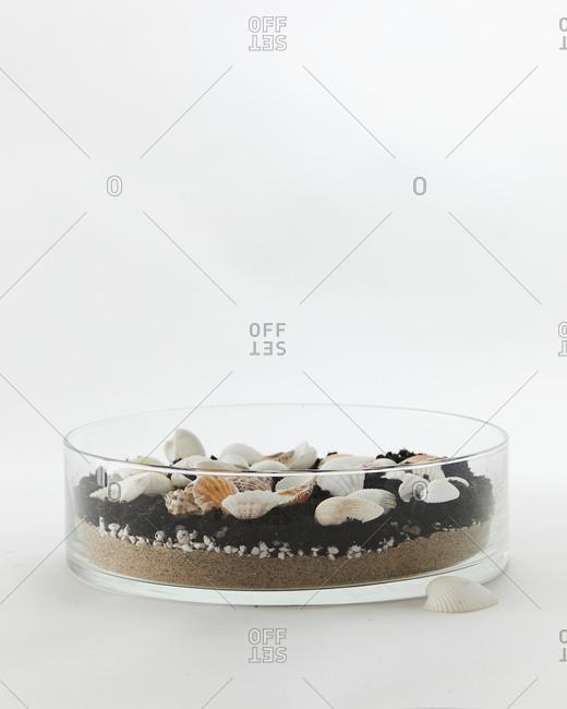 Terrarium with dirt, sand and seashells
