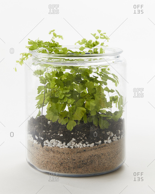 Terrarium in a jar with a small green plant