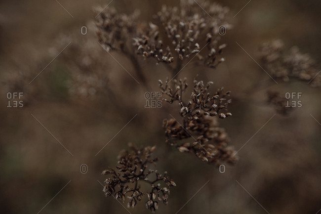 Close up of a dried plant in autumn