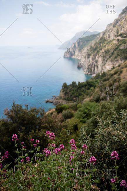Flowers on hillside along the Amalfi Coast in Italy
